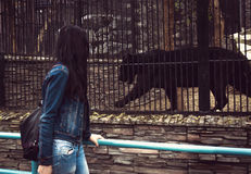 The girl walks through the zoo and looking at animals in cages. Black Jaguar in a cage royalty free stock photography