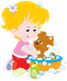 Girl washing a puppy. Little girl washes her small pup in a basin with lather Stock Images