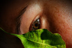 Girl watching behind a poplar leaf. Close up of girl watching hided behind a poplar leaf royalty free stock image