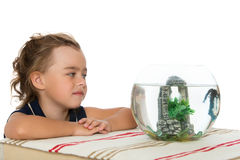 Girl is watching fish in an aquarium Stock Image