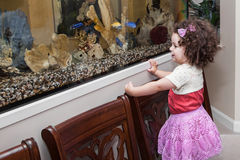 Girl watching fish in aquarium Stock Image