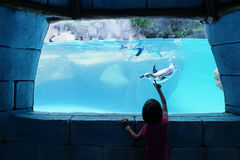 Girl watching penguin in an aquarium Stock Photography