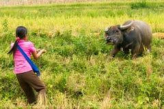 Girl & Water Buffalo stock photography