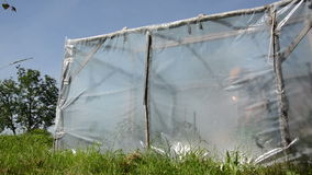 Girl water greenhouse stock video footage