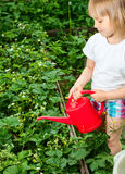 Girl with watering can Stock Image