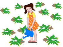 Girl is watering the cucumbers. Little girl watering the cucumbers in the garden Stock Photo