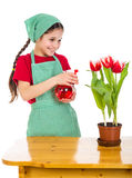 Girl watering a flowers on the desk Royalty Free Stock Photography