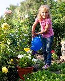 Girl watering flowers are watered from Stock Photo