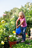 Girl watering flowers are watered from Stock Image