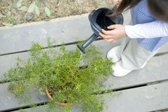 Girl watering a plant Royalty Free Stock Photography