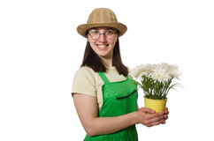 Girl watering plants on white Stock Images