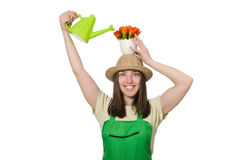 Girl watering plants on white Stock Photography