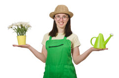 Girl watering plants on white Royalty Free Stock Images