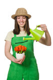 Girl watering plants on white Stock Image