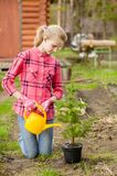 Girl watering a sapling tree Royalty Free Stock Photo