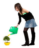 Girl watering a tree Stock Photos