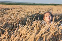 Girl in the wheat field Stock Image