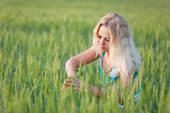 Girl in wheat field. Beautiful young girl in a field of young green wheat in the dawn Royalty Free Stock Photography