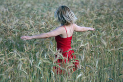 Girl in the wheat Royalty Free Stock Photo
