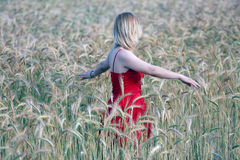 Girl in the wheat Stock Image