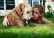 Girl and wheaton terrier. A girl playing with her pet dog, wheaton terrier, in the garden royalty free stock image