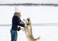 The girl in a white cap and Siberian huskies Stock Photography