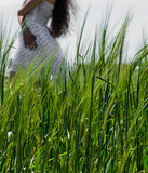 The girl in a white dress on a background of green grass Royalty Free Stock Photo