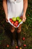 Girl with white dress hold apples. In orchard Royalty Free Stock Image