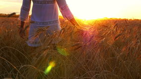 Girl in a white dress is walking along the wheat field, touching wheat spikes, against the background of sunset
