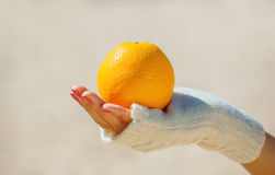 The girl in white gloves holding a ripe orange orange. Stock Images