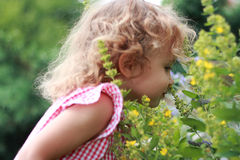 Girl and wildflowers. Enjoyment. Royalty Free Stock Images