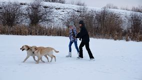 Girl and woman enjoy ice skating on snowy lake with their dogs. Running along - slow motion stock video