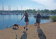 Girl and woman walk dogs along the pier. NYNASHAMN, SWEDEN - JULY 18, 2018: Girl and woman walk dogs along the pier on July 18, 2018 in Nynashamn, Sweden stock images