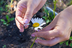 The girl wonders on petals of daisies. The girl wonders on petals of white daisies Stock Photography