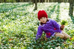 Girl  in the woods Royalty Free Stock Images