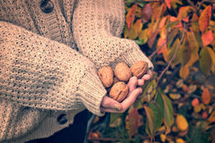 Girl with woolen sweater holding wallnuts in her hands Royalty Free Stock Images