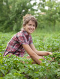 Girl working  in field Royalty Free Stock Photo
