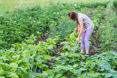 Girl working on a garden Stock Image