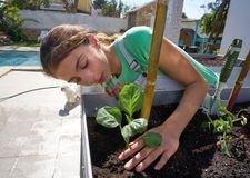 Girl working in orchard raised bed garden. Girl working in orchard raised bed urban garden royalty free stock images