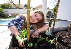 Girl working in orchard raised bed garden royalty free stock image