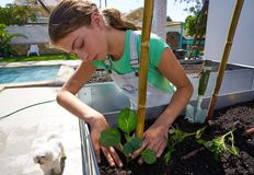 Girl working in orchard raised bed garden royalty free stock photos