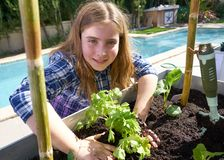 Girl working in orchard raised bed garden royalty free stock images