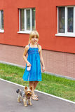 Girl 6 years old in blue dress walking with a Yorkshire terrier near high-rise building Stock Images