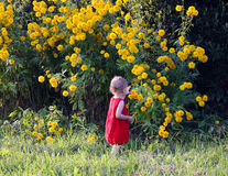 Girl with yellow flowers Royalty Free Stock Images