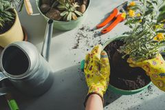 Girl planting a plant in green pot-top view stock photos