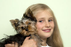 Girl with Yorkie Stock Photos
