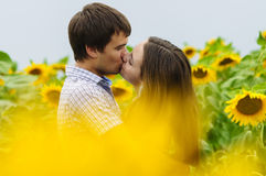 Girl and a young man in the field of sunflowers Stock Photography