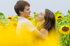 Girl and a young man in the field of sunflowers Royalty Free Stock Image
