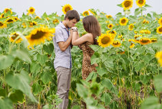 Girl and a young man in the field of sunflowers Stock Photos