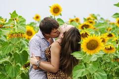 Girl and a young man in the field of sunflowers Stock Images
